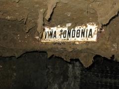 Moldy aging cellar at vina Tondonia