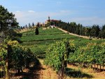 Vineyards in Montalcino, Italy