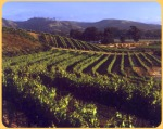 Melville Estate vineyard