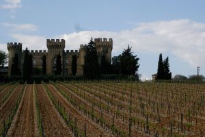 Chateauneuf-du-Pape vineyard in Rhone Valley
