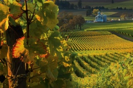 Willamette Valley vineyard