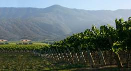Santa Lucia Highlands vineyard