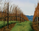 Rosella's Vineyard