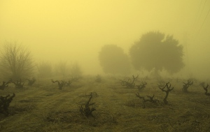 Oakley_ghost_vineyard