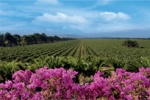 about-our-winery-photo-2