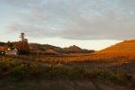image-vineyards-and-winery-Seghesio