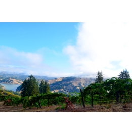 Rockpile Vineyard