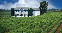 Lewis Cellars and vineyard