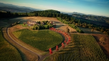 Evenstad Vineyard