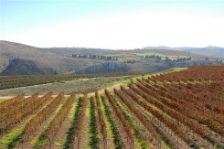 Yiron Vineyard, Galil Mountain