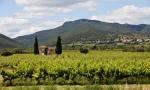 Corbieres vineyard